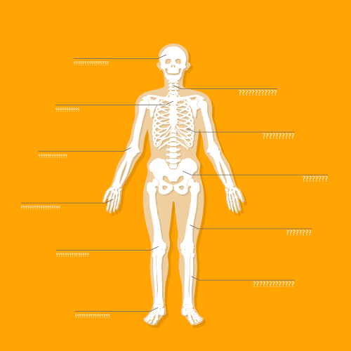 Body parts in Persian